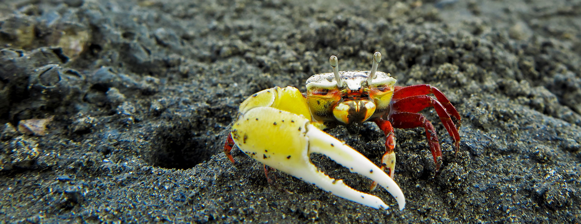 麥寮港水下生態豐富,「海洋生態實驗室」是您戶外教學不可缺席的景點!